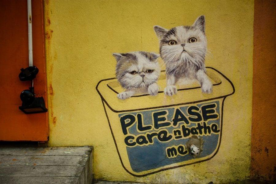 Penang Street Art - Pisici cerşetore