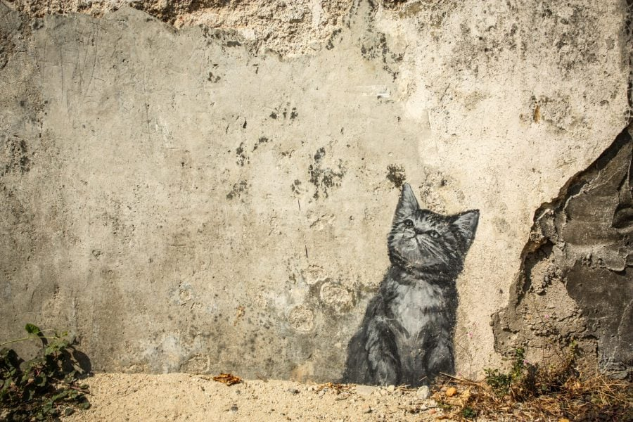 Penang Street Art - Pisicuţa