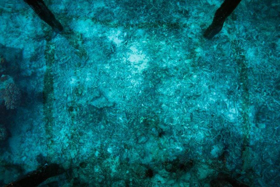 Ponton până la corali, Raja Ampat, Papua