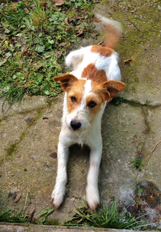Câine din Bigar