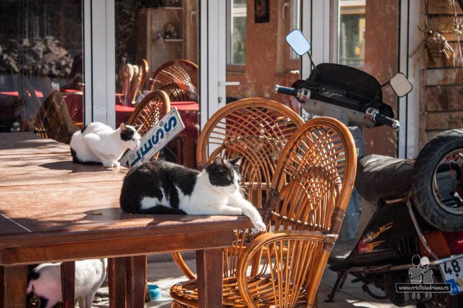 Bozburun, pisici pe masă