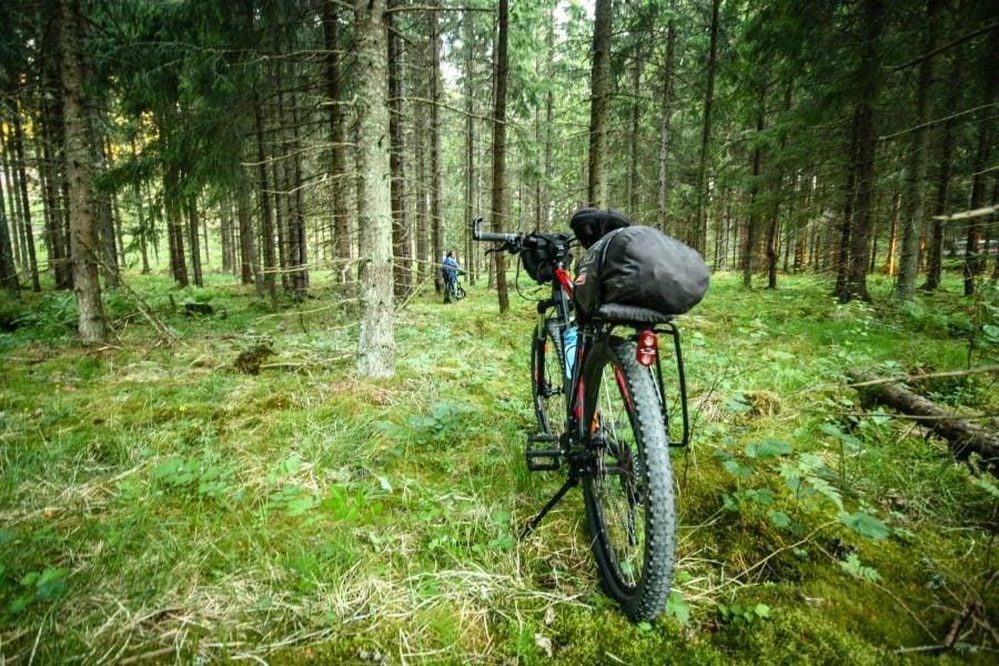 Cu bicicleta prin pădure