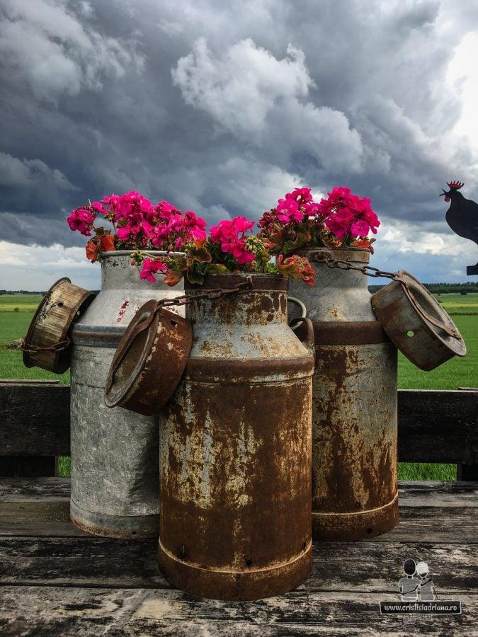 Flori in bidoane metalice de lapte