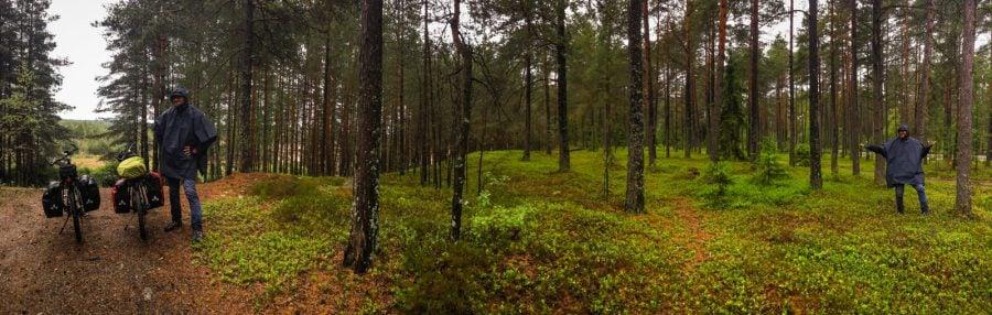 Panoramă în pădure, Suedia
