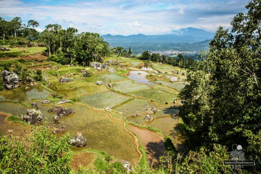 Orezărie terasată Tana Toraja