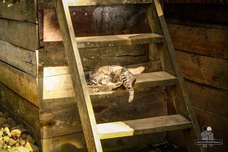 Pisică doarme pe scară