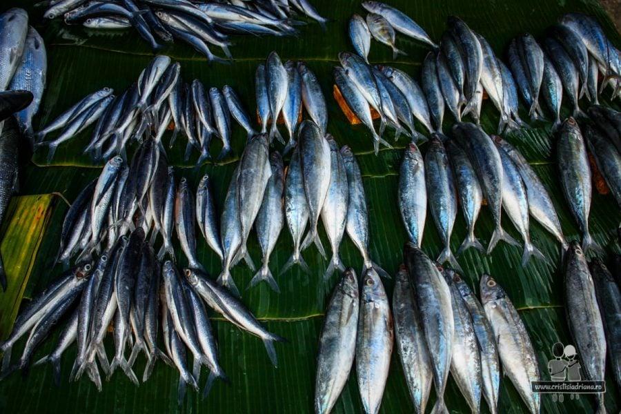 Pește în Rantepao