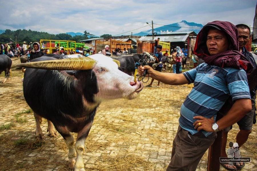 Vânzător de bivoli în Pasar bolu