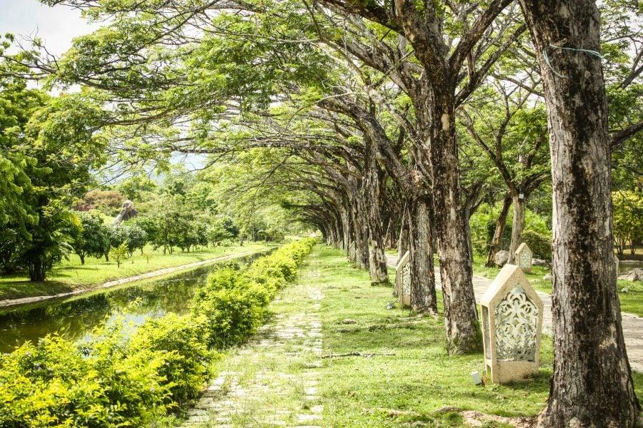 Copaci verzi arcuiți