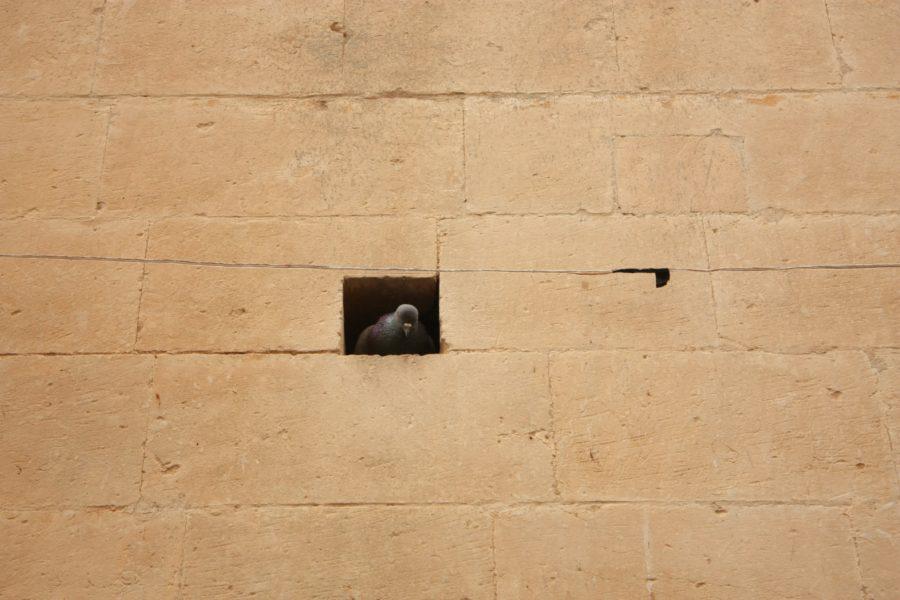 Porumbel în chuib, Noto, Sicilia