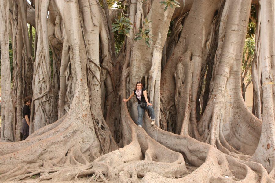 Adriana cocoțată în copac