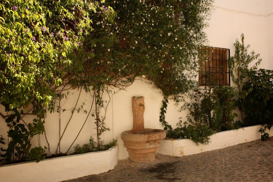 Cum se cresc plantele decorative în sudul Spaniei
