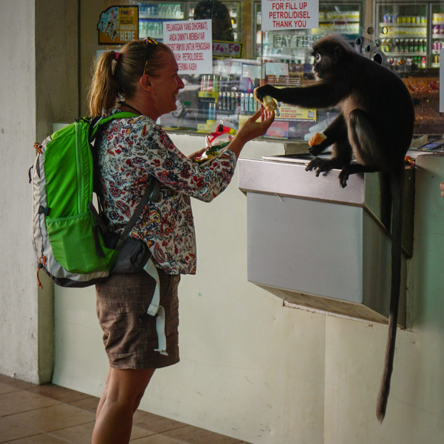 Giving food to a monkey at a petrol station