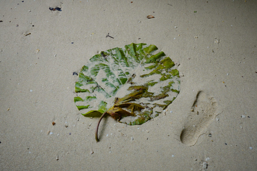 Large leaf on sand, human foot step for size