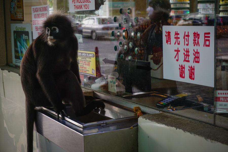 Monkey at the cashier's desk
